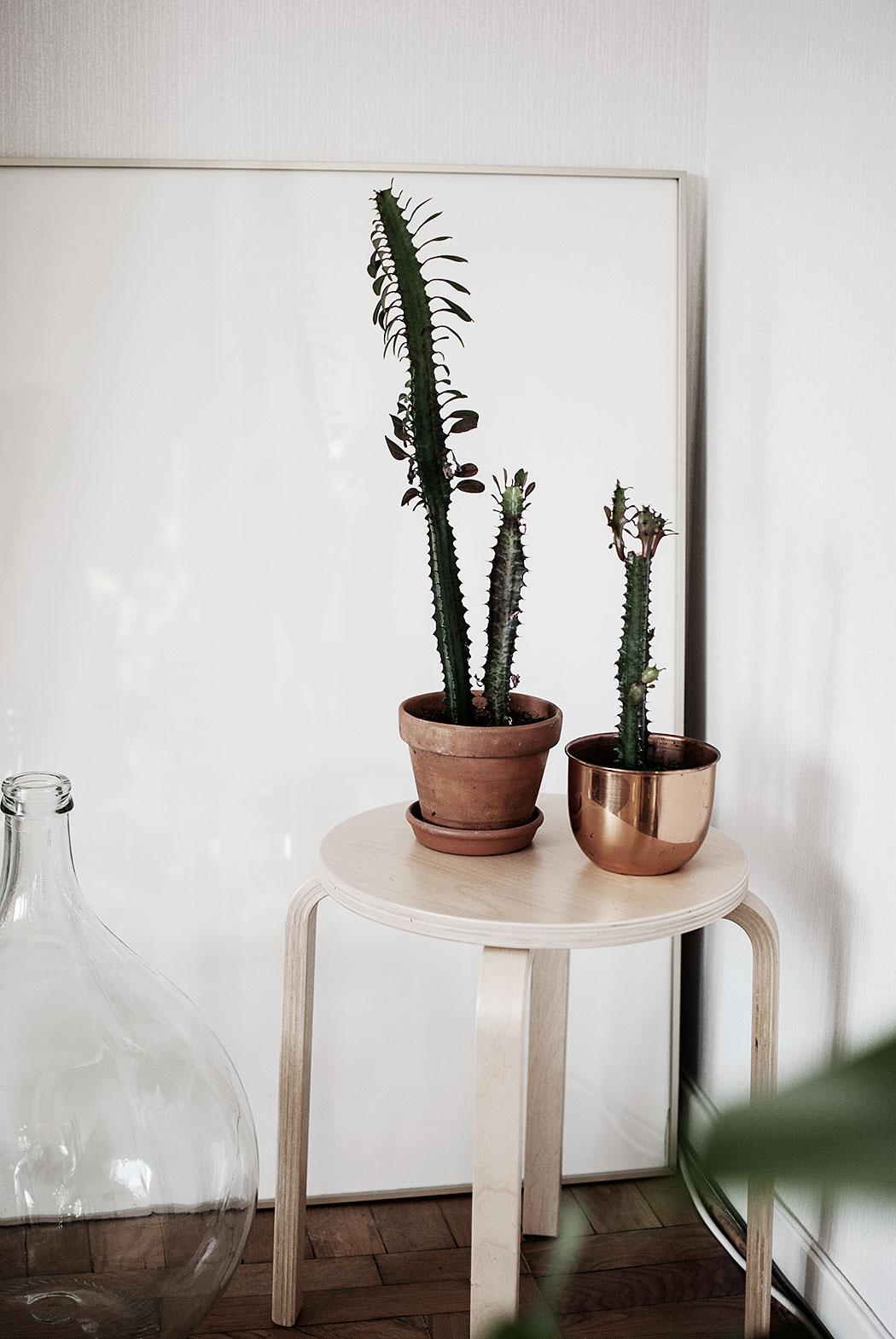 kaktus – omplantering och beskärning: uppdatering