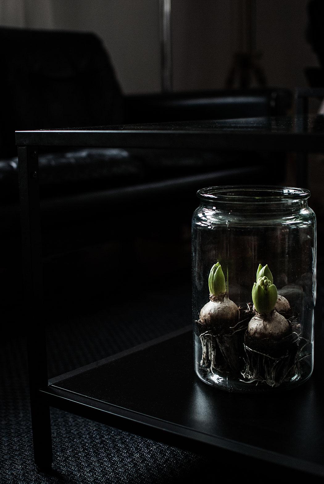 hyacint1