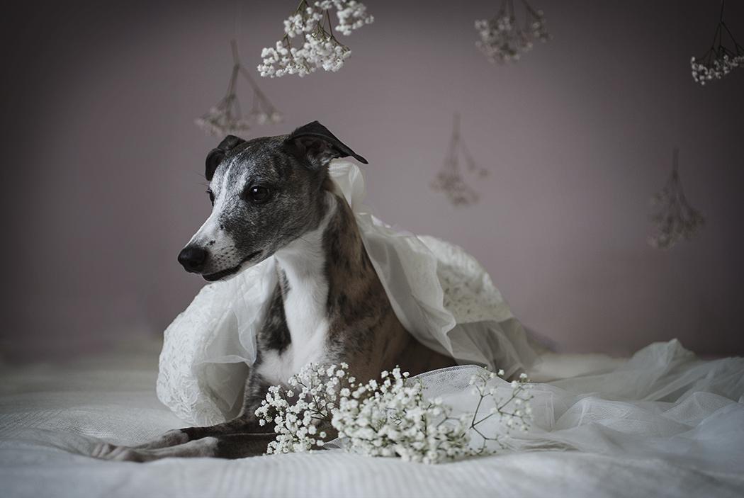 Monthly Makers djur – hundporträtt