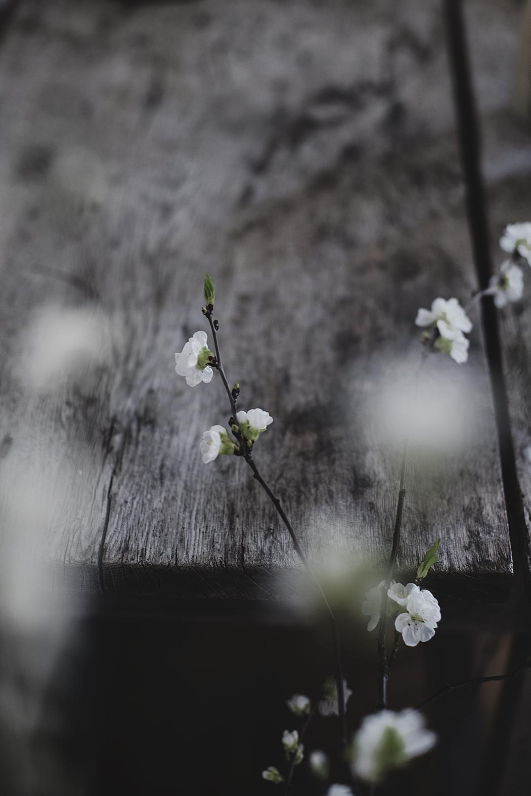 klarbärsblom