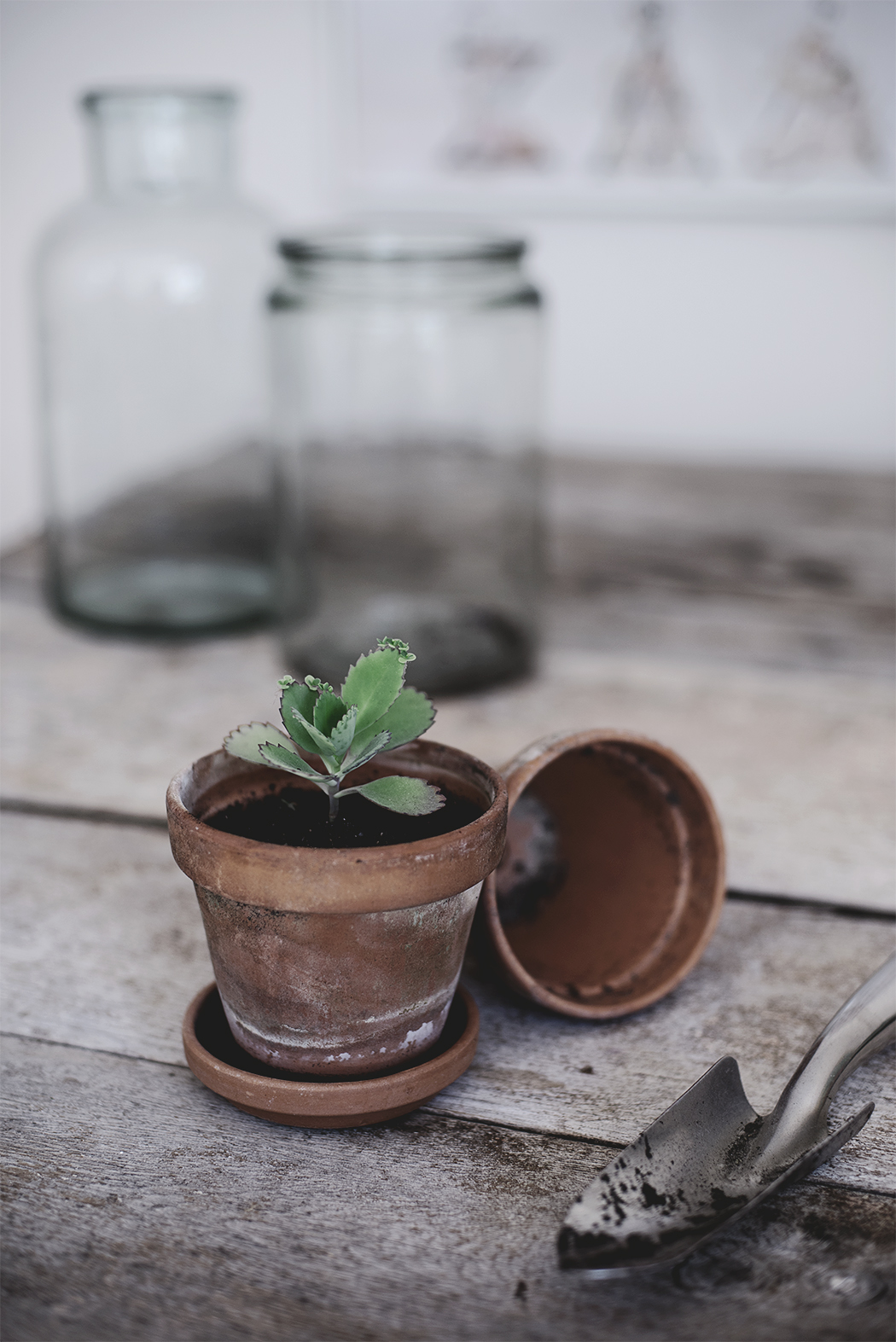 omplantering